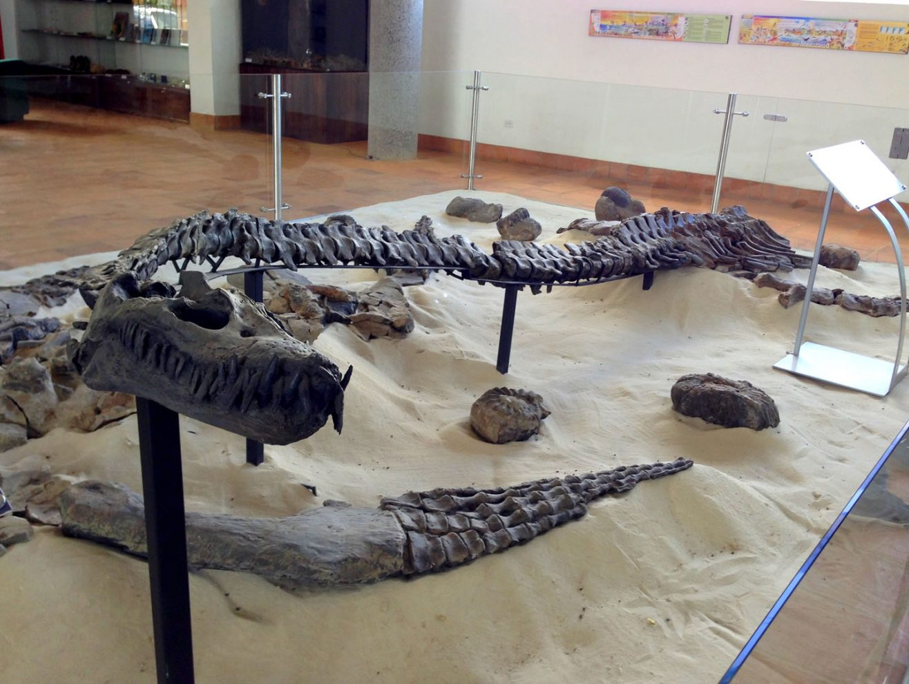 Fossil-and-Paleontologic-Institute-in-Villa-de-Leyva-2