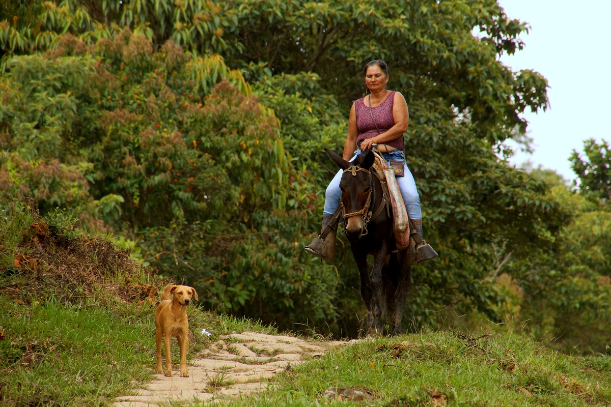 Guadalupe Town-Las Gachas Stream-Colombian-Highlands-Tours Colombia (1)