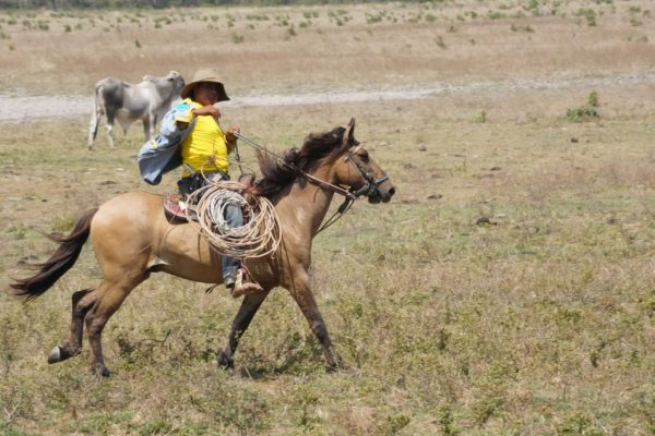 Cowboy in Casanare. Plains-of-Colombia-with-Colombian-Highlands-11-1024×683