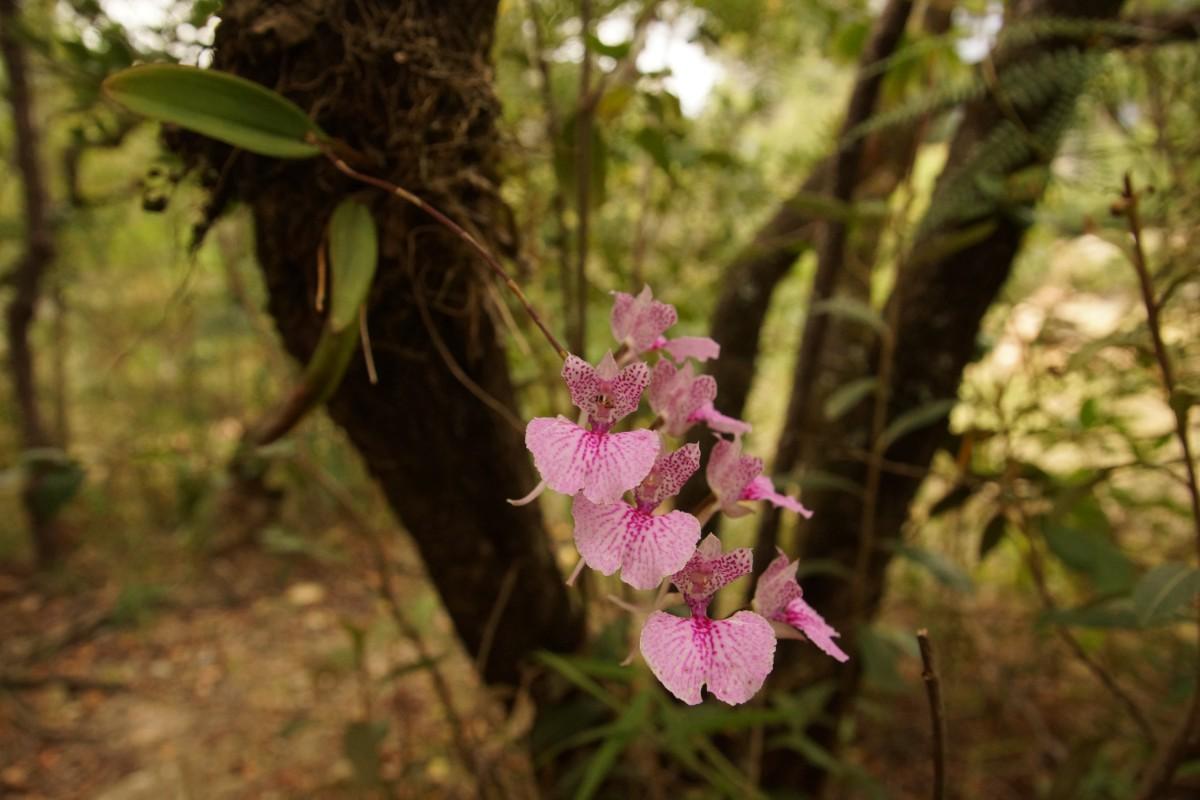 Orquidia en Bosque Alto Andino