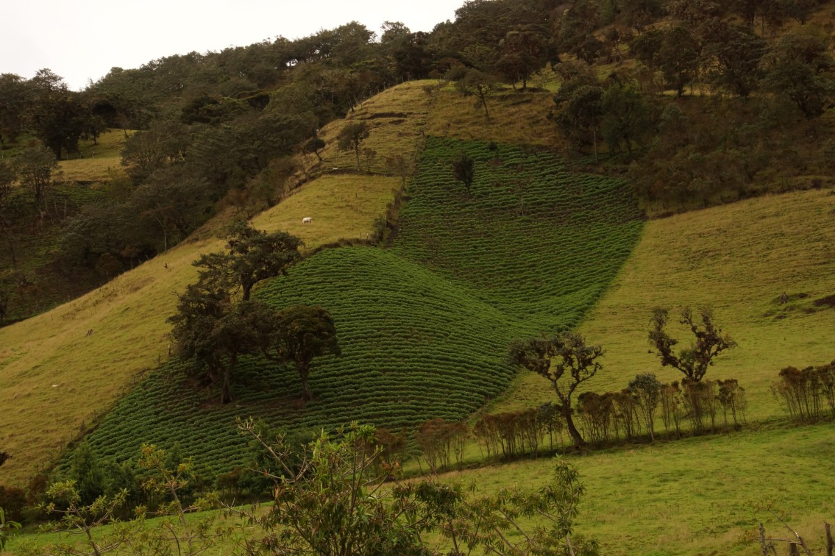 Landscape of South Andes, Cauca, Colombian Highlands Tours